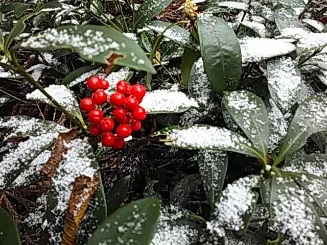 金剛山 二回目の雪